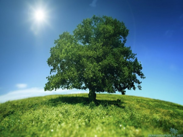 100 Ways To Live A Better Life – 54. Plant A Tree